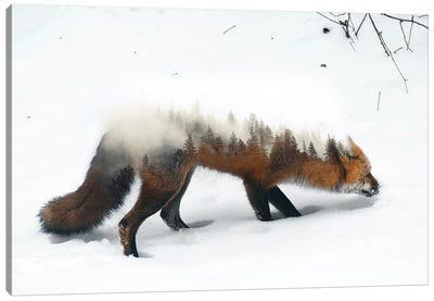 Winter Fox Canvas Art Print