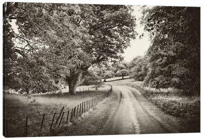 Country Roads Canvas Art Print