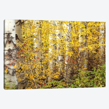 Hiding Canvas Print #PAL5} by Janel Pahl Canvas Wall Art