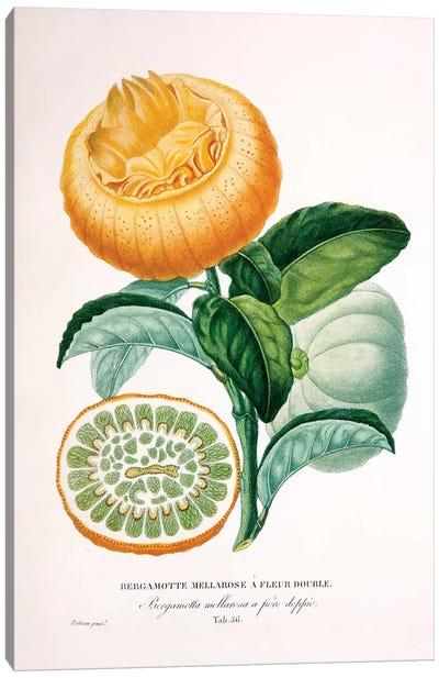 Bergamotte Mellarose A Fleur Double Canvas Art Print