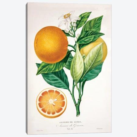 Oranger de Genes Canvas Print #PAP3} by Pierre-Antoine Poiteau Canvas Art