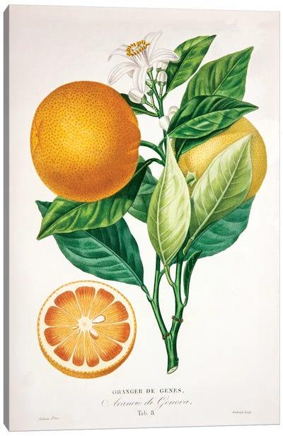 Oranger de Genes Canvas Art Print