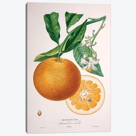 Oranger de Nice Canvas Print #PAP4} by Pierre-Antoine Poiteau Canvas Art Print