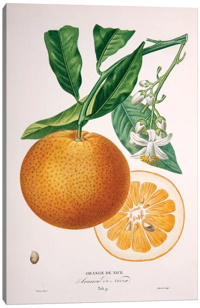 Oranger de Nice Canvas Art Print