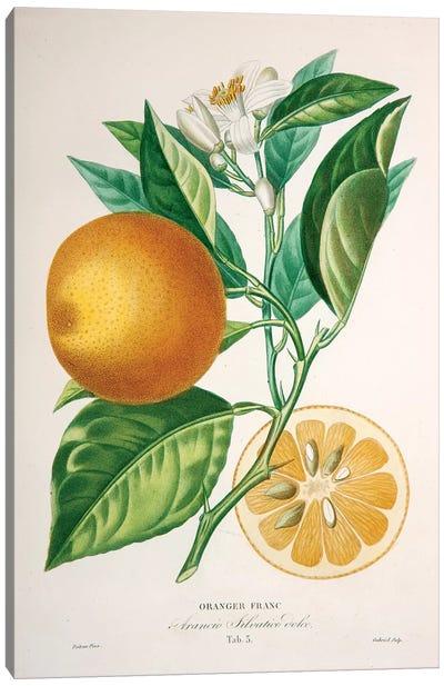 Oranger Franc Canvas Art Print