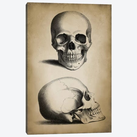 Skull Canvas Print #PAT114} by PatentPrintStore Canvas Print