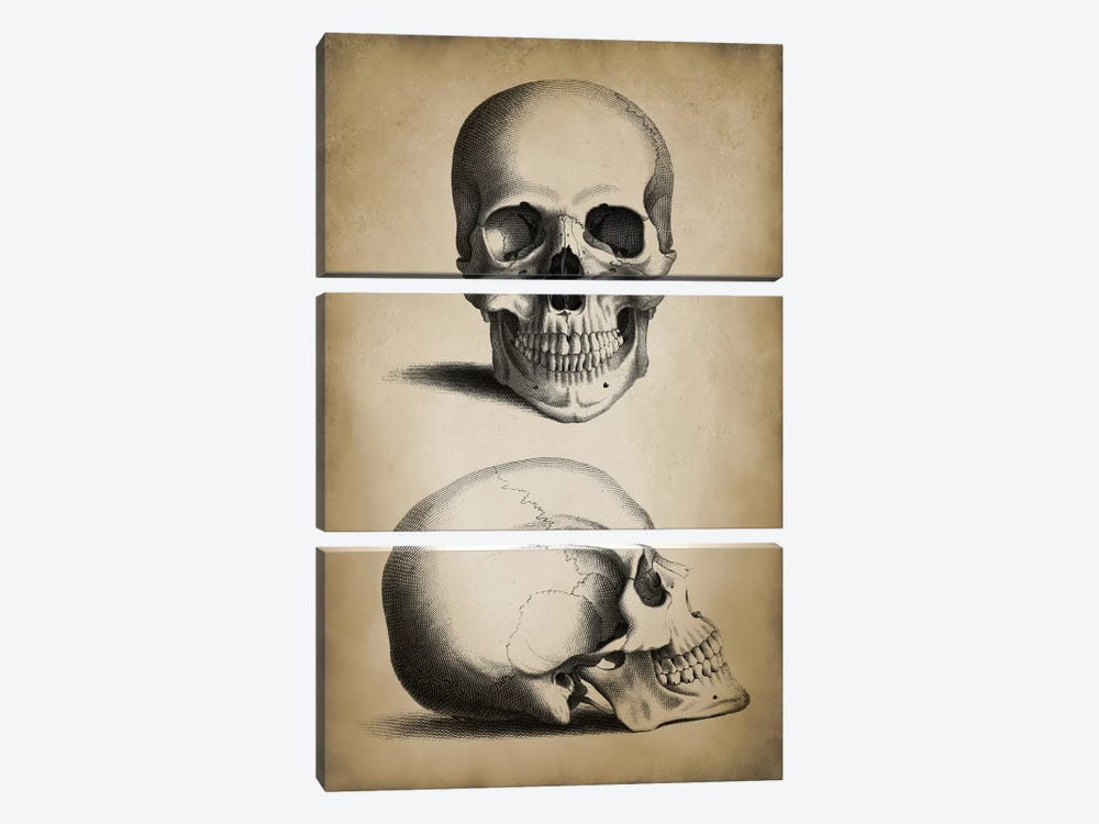 Skull by PatentPrintStore 3-piece Canvas Wall Art