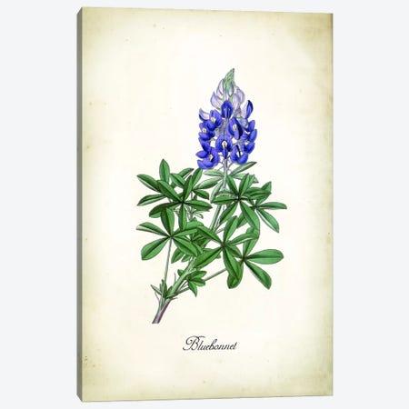 Blue Bonnet Canvas Print #PAT155} by PatentPrintStore Canvas Art Print