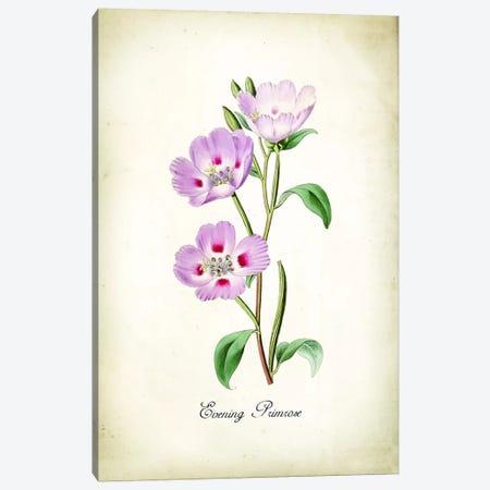 Evening Primrose Canvas Print #PAT161} by PatentPrintStore Art Print