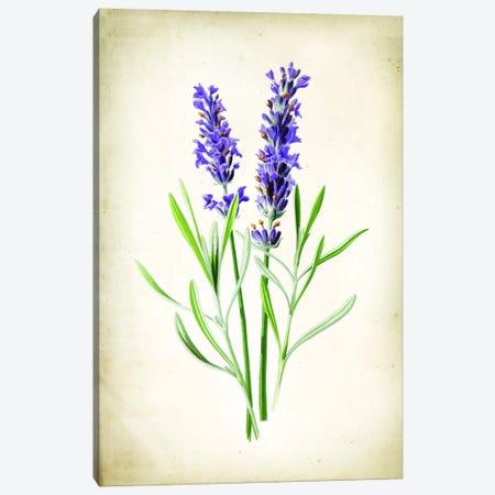 Lavender Canvas Print #PAT164} by PatentPrintStore Canvas Artwork