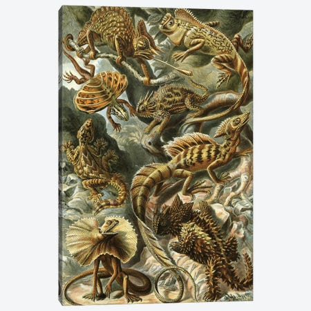 Haeckel Lizards Canvas Print #PAT70} by PatentPrintStore Canvas Print