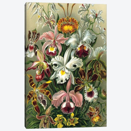 Haeckel Orchids Canvas Print #PAT71} by PatentPrintStore Canvas Print