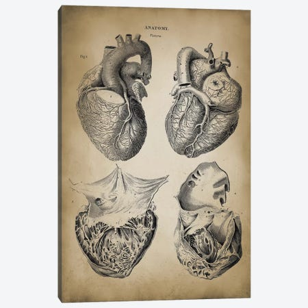 Heart Anatomy Canvas Print #PAT75} by PatentPrintStore Canvas Wall Art