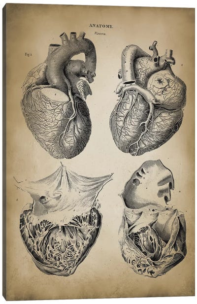 Heart Anatomy Canvas Art Print