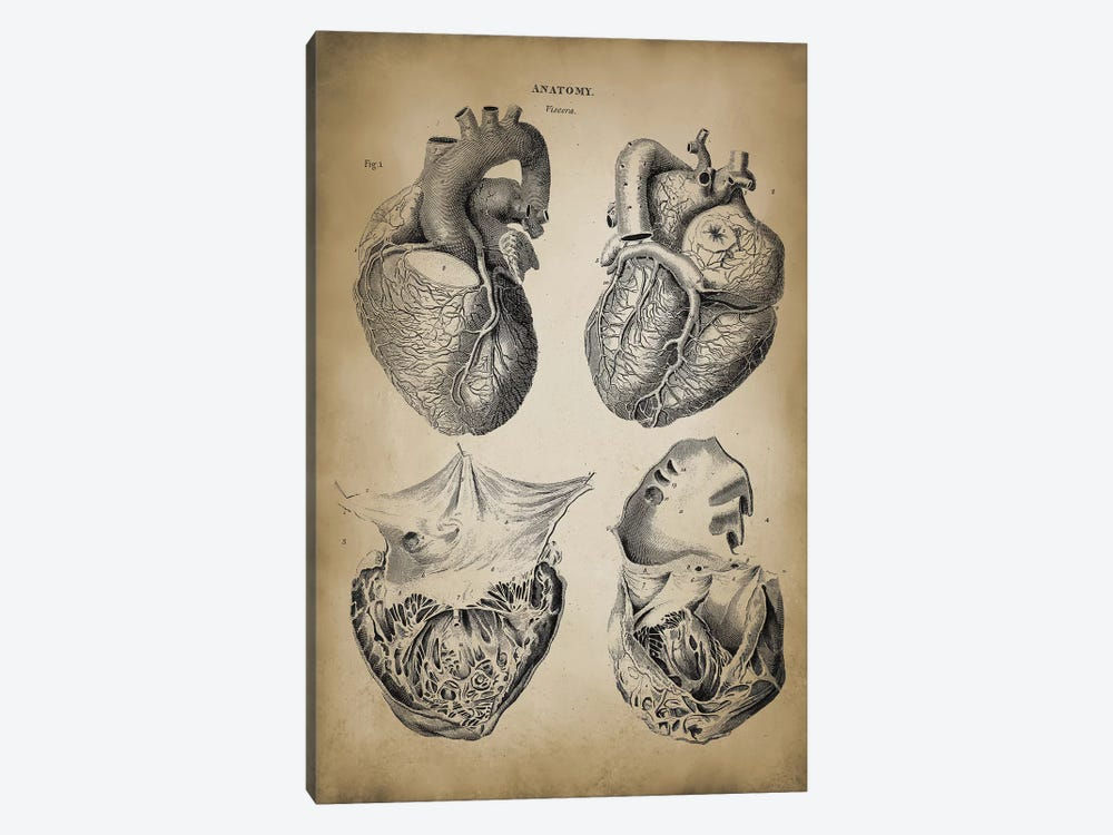 Heart Anatomy by PatentPrintStore 1-piece Canvas Wall Art