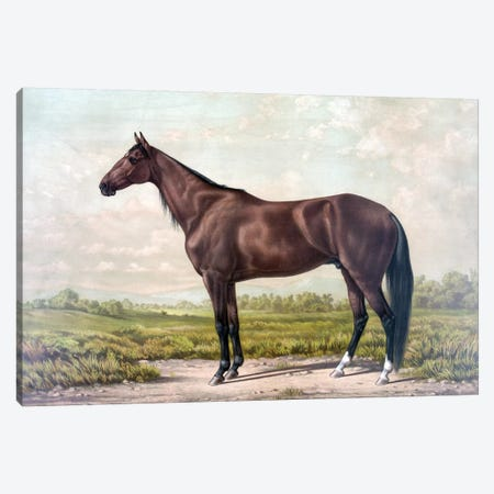 Horse I Canvas Print #PAT76} by PatentPrintStore Canvas Artwork