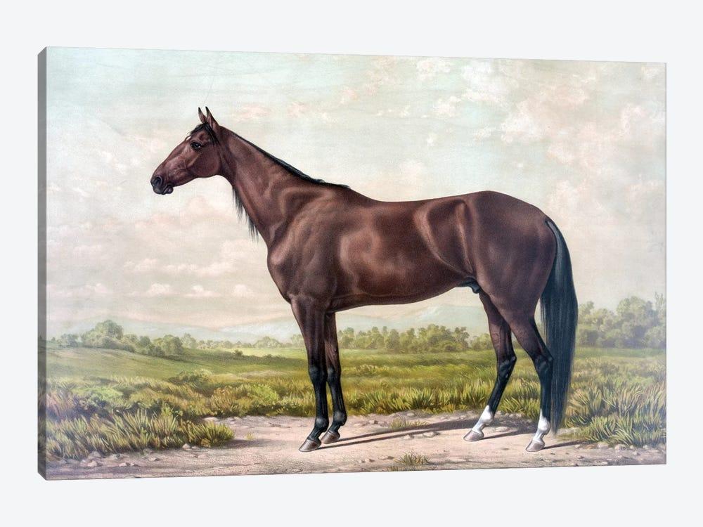 Horse I by PatentPrintStore 1-piece Art Print