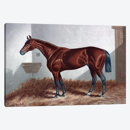 Horse II Canvas Print #PAT77} by PatentPrintStore Canvas Wall Art