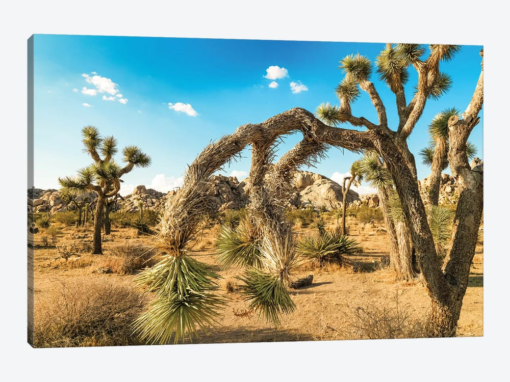 Joshua Tree National Park by Mark Paulda 1-piece Art Print