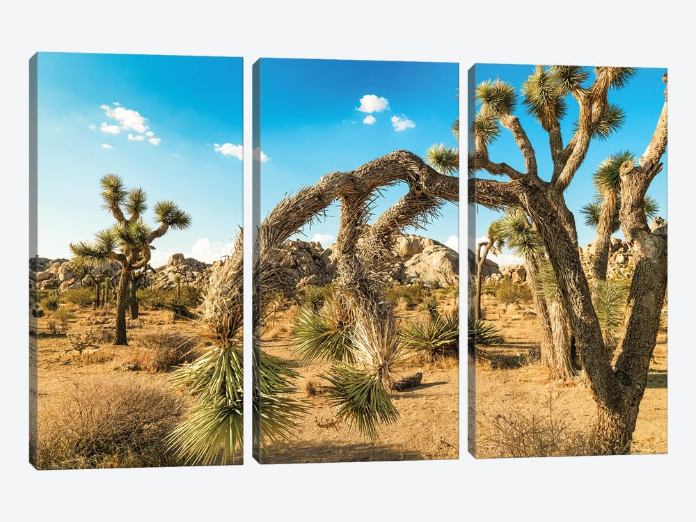 Joshua Tree National Park by Mark Paulda 3-piece Canvas Print