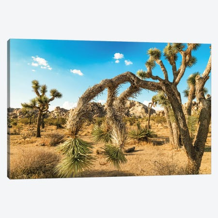 Joshua Tree National Park Canvas Print #PAU115} by Mark Paulda Canvas Art