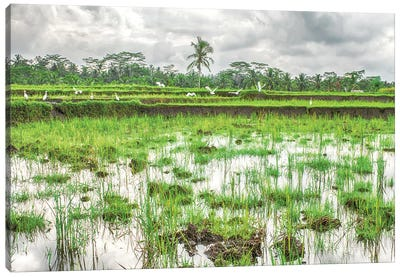 Bali Rice Field Canvas Art Print