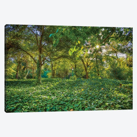 Bosques De Palermo - Buenos Aires Canvas Print #PAU135} by Mark Paulda Canvas Art