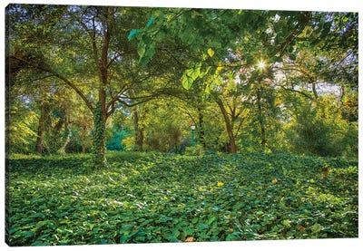Bosques De Palermo - Buenos Aires Canvas Art Print