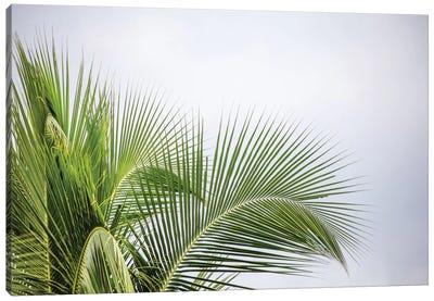 Palm Tree Canvas Print #PAU16
