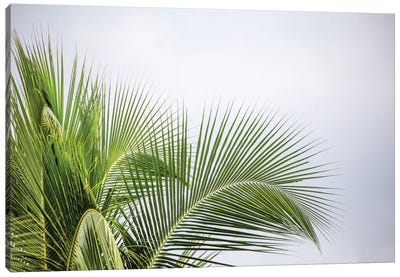 Palm Tree Canvas Art Print