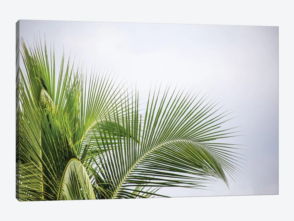 Palm Tree by Mark Paulda 1-piece Canvas Art