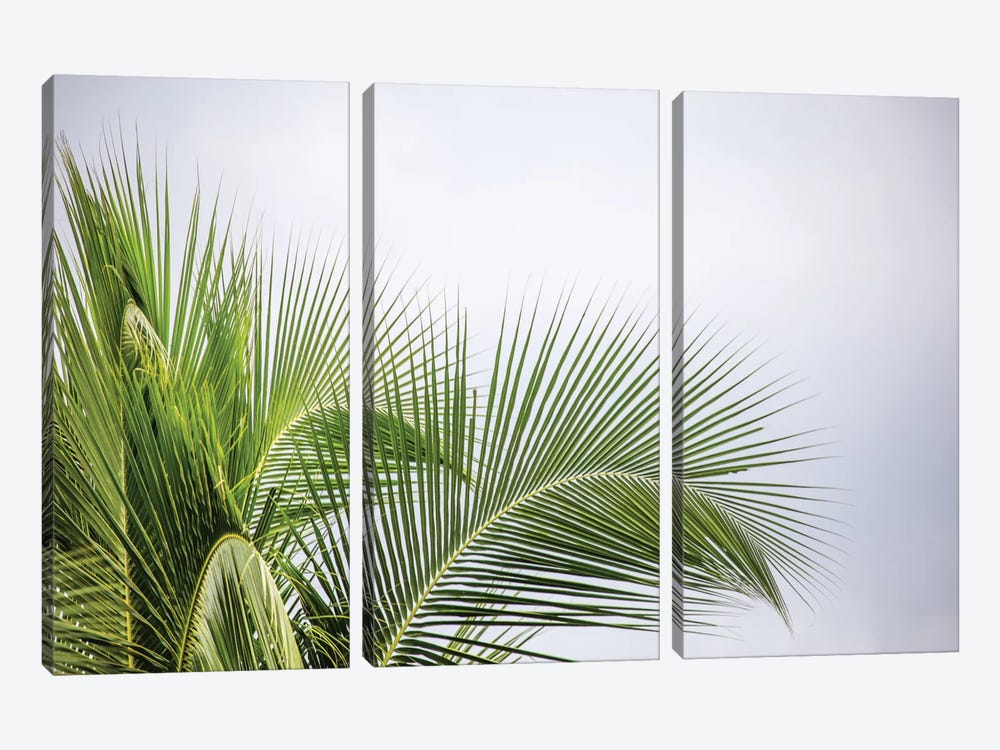 Palm Tree by Mark Paulda 3-piece Canvas Art