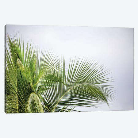 Palm Tree Canvas Print #PAU16} by Mark Paulda Art Print