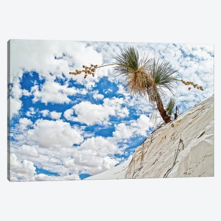 Leaning Cactus Canvas Print #PAU186} by Mark Paulda Canvas Art Print