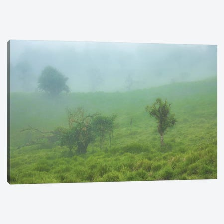 Andes Cloud Forest Canvas Print #PAU202} by Mark Paulda Canvas Print
