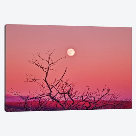 Desert Moonrise Canvas Print #PAU212} by Mark Paulda Canvas Wall Art