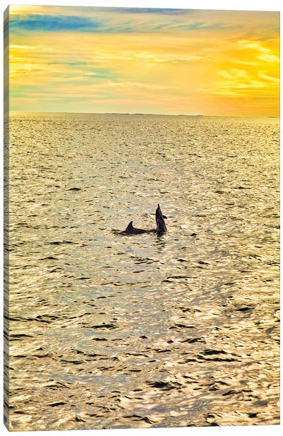 Dolphins In The Maldives Canvas Art Print