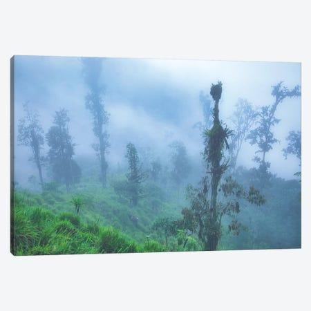 Andes Mountains Cloud Forest Canvas Print #PAU217} by Mark Paulda Canvas Art Print