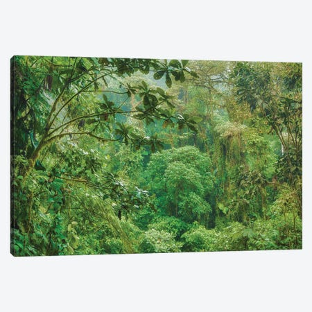 Jungle In The Andes Canvas Print #PAU218} by Mark Paulda Canvas Art