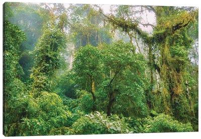 Mountain Jungle Canvas Art Print