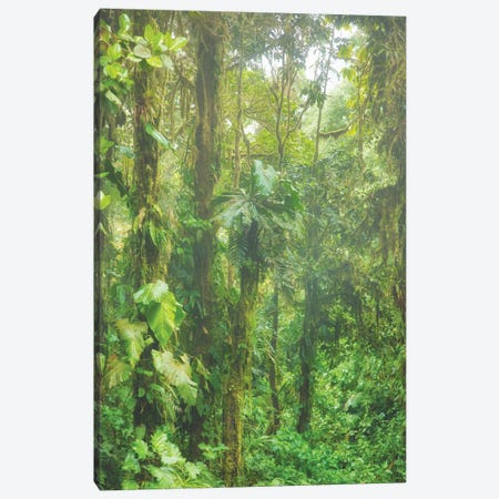 Jungle Mist Canvas Print #PAU221} by Mark Paulda Canvas Art Print