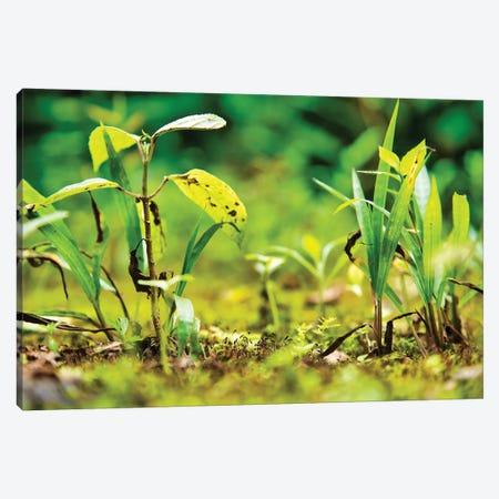 Ecuador Miniature Jungle Canvas Print #PAU222} by Mark Paulda Art Print