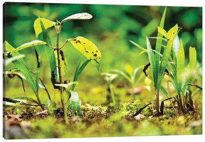Ecuador Miniature Jungle Canvas Art Print