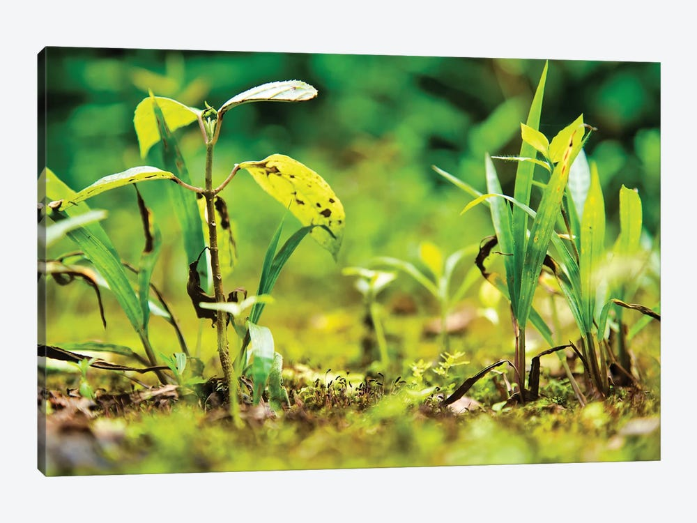 Ecuador Miniature Jungle by Mark Paulda 1-piece Art Print