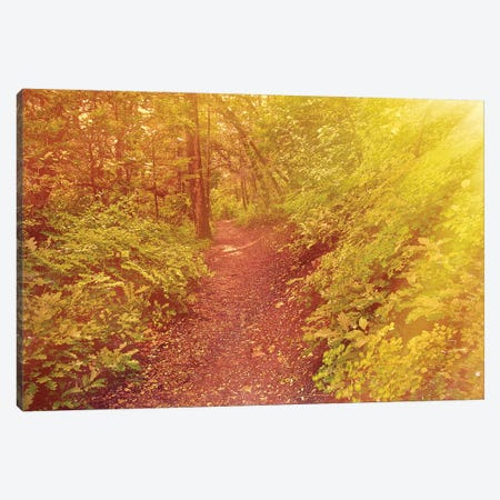 Forest Sunrays Canvas Print #PAU224} by Mark Paulda Canvas Wall Art