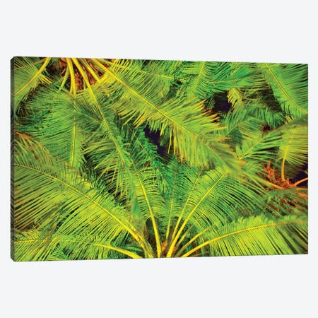 Dancing Palm Fronds Canvas Print #PAU232} by Mark Paulda Canvas Artwork