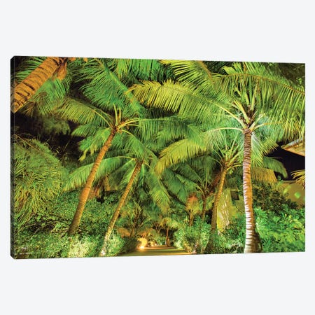 Palm Tree Path Canvas Print #PAU234} by Mark Paulda Canvas Art Print