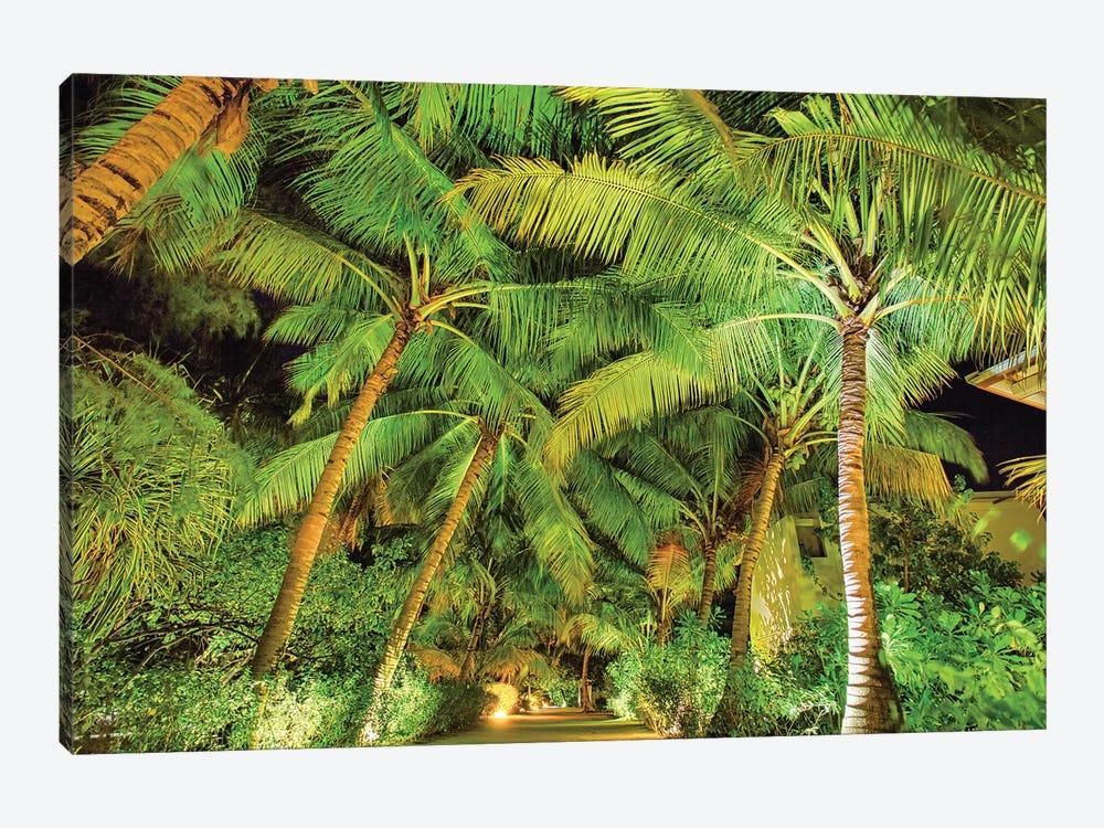 Palm Tree Path by Mark Paulda 1-piece Canvas Art