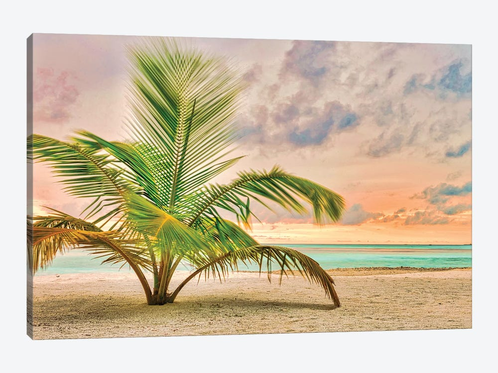 Sunset Palm by Mark Paulda 1-piece Art Print
