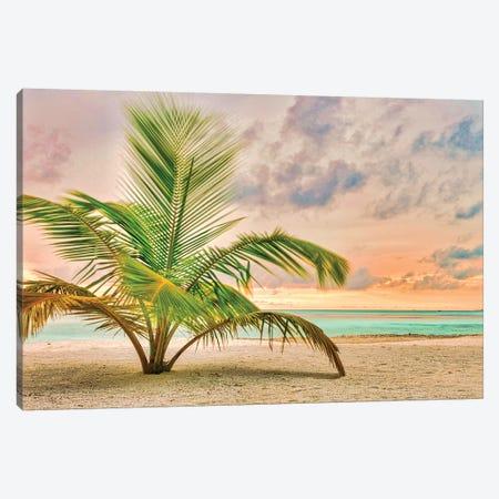 Sunset Palm Canvas Print #PAU235} by Mark Paulda Canvas Art Print
